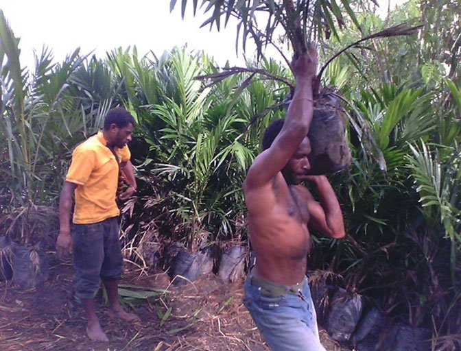 "Oil Palm workers exploited ""New Black Birding Style"""