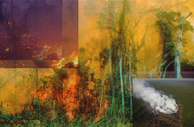 Indonesia_burning_away_rainforest_for_palm_oil_plant