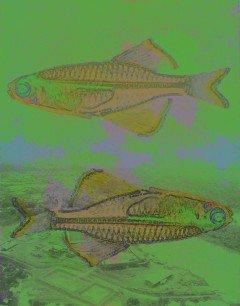 dead-fish-mining-capitalism